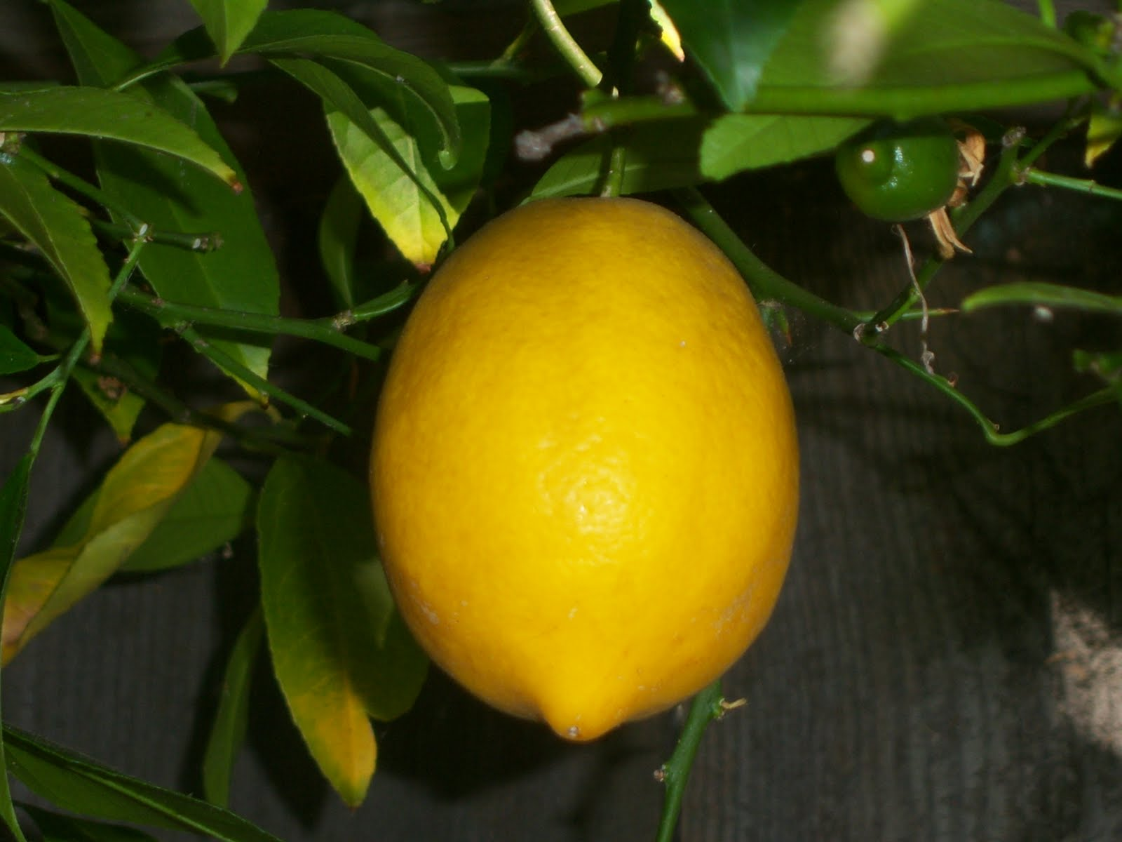 Lemon Snow Filling