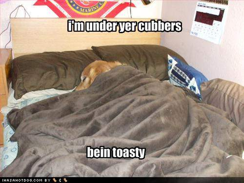 Toasty Dogs